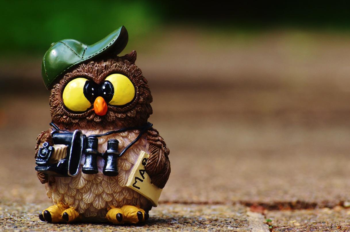 Owl 964011